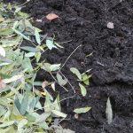 Ogród przykryty liśćmi
