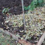 Przykrywanie ogrodu na zimę kołderką