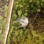 ciepły inspekt kwietniowe słoneczko rybniki ogród permakultura