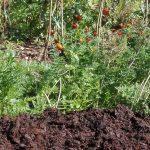 kompost z pryzmy grzewczej permakultura