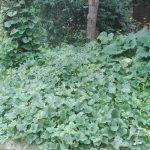 melony permakultura podniesione grzadki