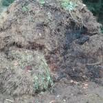 ogrzewanie-obornikiem-pryzma-grzewcza-kompost