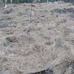permakultura-w-ogrodzie-okrywanie-grzadek