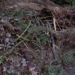 podniesiona grzadka permakultura ogrod rybniki obornik