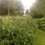 rybniki permakultura ogród symbioza lipiec wermikompost