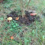 em permakultura maślaki grzyby